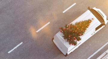 Tannenbaumtransport: So die weihnachtliche Ladung sichern