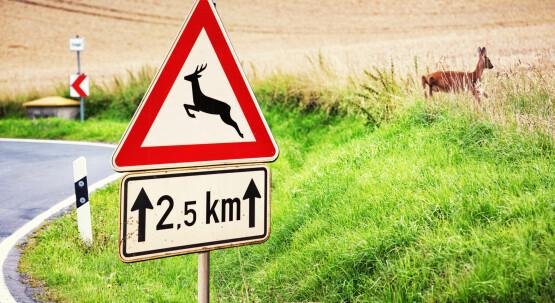 Das Unfallrisiko durch Wildwechsel minimieren