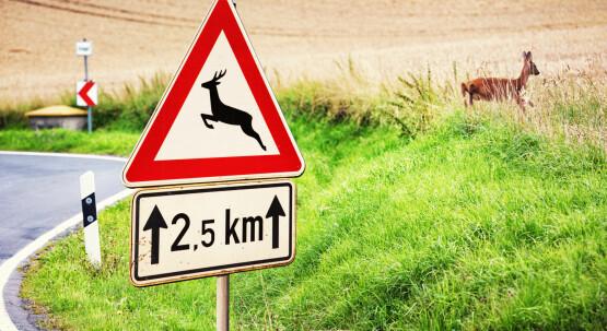 Tierische Verkehrsteilnehmer